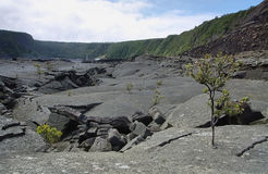 Kilauea Iki Crater trail in Hawaii Royalty Free Stock Photo
