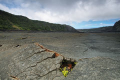 Kilauea Iki Crater trail in Hawaii Stock Image