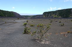 Kilauea Iki crater trail Stock Photography