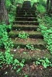 Kilbuck Bluffs Staircase - Illinois Stock Photo