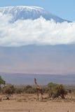 Kilimajaro en giraf Stock Afbeelding