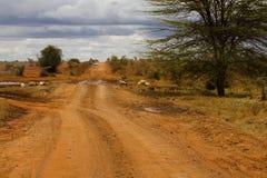 kilimandżaro road Zdjęcia Stock