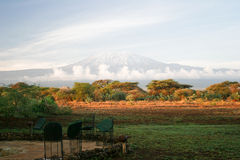 kilimangiaro изображения Стоковые Изображения