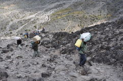 kilimanjaro搬运程序 免版税库存图片
