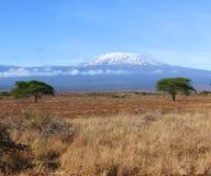kilimanjaro横向 免版税库存照片