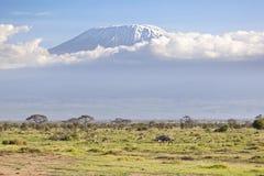 Kilimanjaro με το χιόνι ΚΑΠ Στοκ φωτογραφίες με δικαίωμα ελεύθερης χρήσης