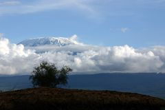 Kilimanjaro. Landscape with fresh snow Stock Images