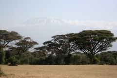 Kilimanjaro Royalty Free Stock Photo