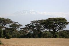 kilimanjaro Royaltyfri Foto