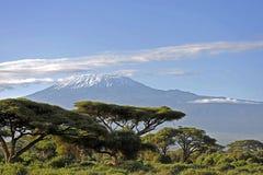 Kilimanjaro Fotografia Stock