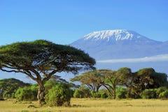 kilimanjaro Stock Afbeelding