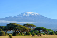 kilimanjaro Fotos de Stock Royalty Free