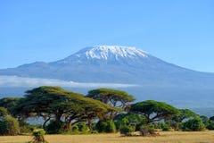 kilimanjaro Fotografie Stock Libere da Diritti