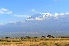 kilimanjaro 免版税库存照片