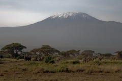 kilimanjaro Стоковая Фотография
