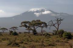 kilimanjaro Стоковая Фотография RF
