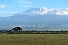 kilimanjaro Arkivbilder
