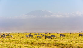 kilimanjaro 图库摄影