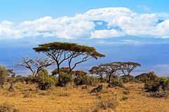 kilimanjaro royalty-vrije stock afbeeldingen