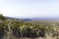 kilimanjaro Zdjęcie Stock