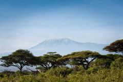 Kilimanjaro Stock Photos