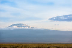 Kilimanjaro Stock Photography