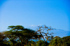 Kilimanjaro in Amboseli Royalty-vrije Stock Foto
