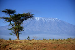 Kilimanjaro in Amboseli Stock Photo