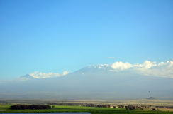 Kilimanjaro, Amboseli National Park, Kenya Stock Photography