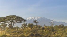 Kilimanjaro au Kenya Images libres de droits