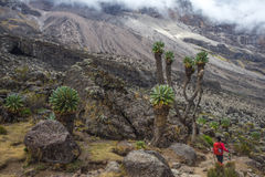Kilimanjaro Barranco läger Arkivbilder