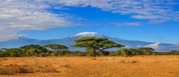 Kilimanjaro bergTanzania Kenya lopp Afrika Arkivbilder