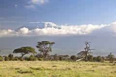 Kilimanjaro con el casquillo de la nieve fotografía de archivo libre de regalías