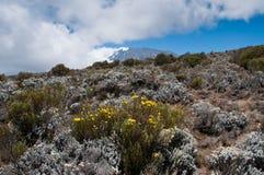 Kilimanjaro dai pendii più bassi Fotografia Stock