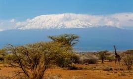 Kilimanjaro der höchste Berg in Afrika von Nationalpark Amboseli lizenzfreies stockbild