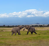 Kilimanjaro elephants Stock Photo