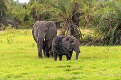 Kilimanjaro elephants Royalty Free Stock Images
