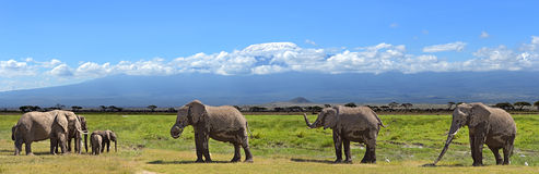 Kilimanjaro elephants Royalty Free Stock Photography