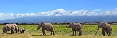 Kilimanjaro elephants Royalty Free Stock Photography