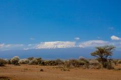 Kilimanjaro góra, rabatowy park narodowy, Afryka, Tanzania i Kenja Amboseli, Obrazy Stock