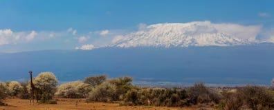 Kilimanjaro högst berg i den Afrika sikten från Amboseli Arkivfoto