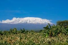 Kilimanjaro högst berg i väg för Afrika siktsfron Arkivfoton
