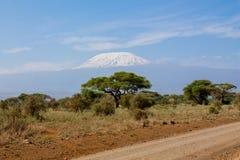 Kilimanjaro högst berg i väg för Afrika siktsfron Royaltyfri Fotografi