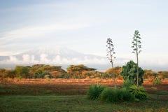 Kilimanjaro image Stock Image