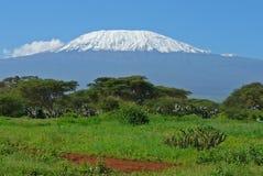 Kilimanjaro in Kenia Stock Afbeeldingen