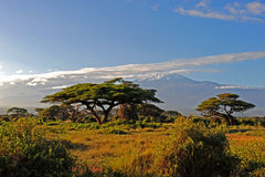 Kilimanjaro kenya Stock Photo