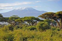 Kilimanjaro kenya Fotografering för Bildbyråer