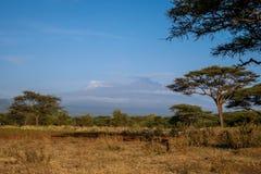 Kilimanjaro - Kibo and Mawenzi peaks, roof af Africa Stock Image