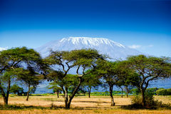 Kilimanjaro landscape Stock Photography