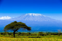 Kilimanjaro landscape. African savannah with top of kilimanjaro Stock Image